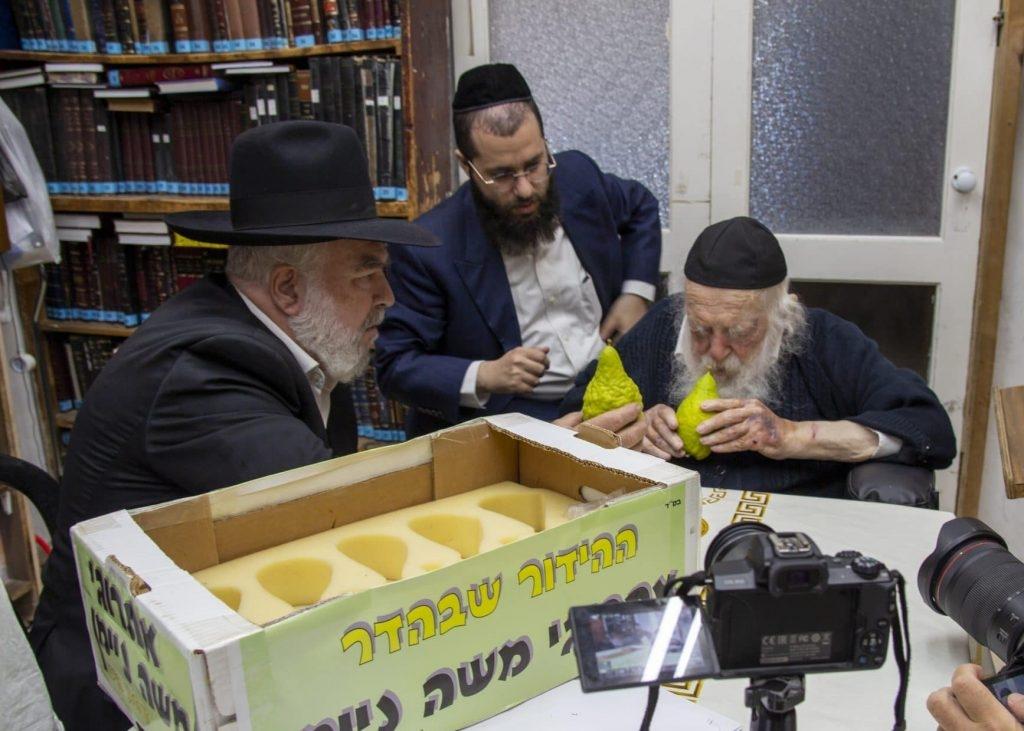 """חביבות מצווה: גדו""""י ישראל מתפעלים מהאתרוג • גלריה"""