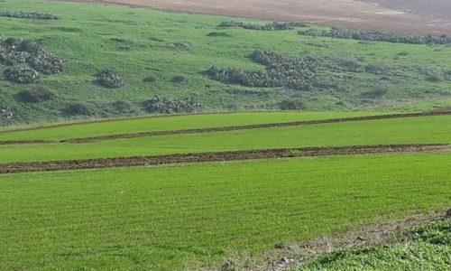 שדה בארץ ישראל