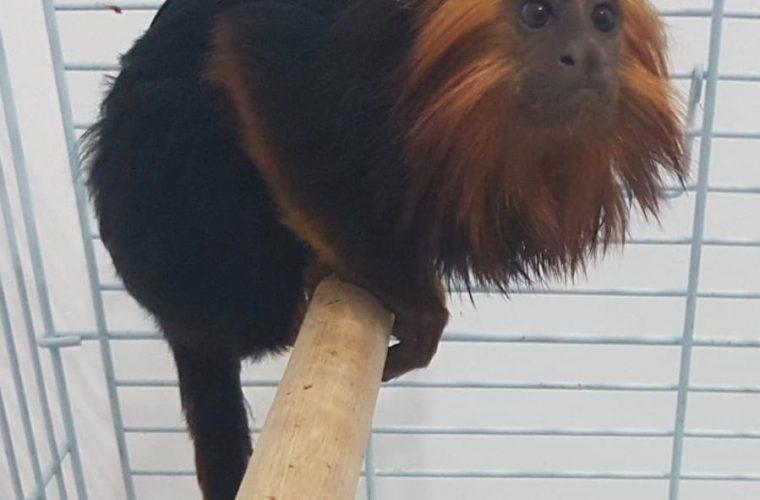 הקוף הגנוב צילום דוברות המשטרה